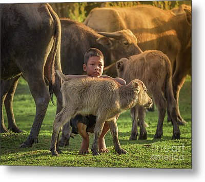 Asian Children And Buffalo At Countryside. Metal Print by Tosporn Preede