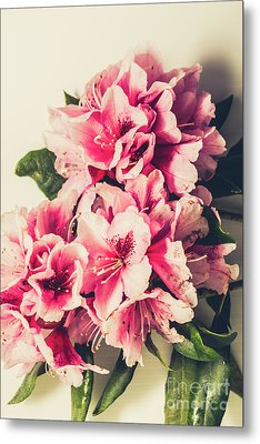 Asian Floral Rhododendron Flowers Metal Print by Jorgo Photography - Wall Art Gallery