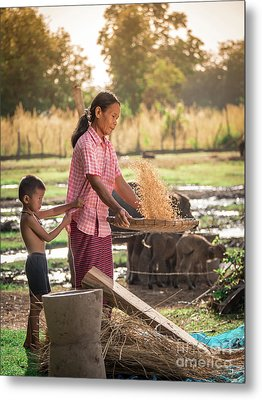 Asian Women Winnow Rice Rice Separate Between Rice And Rice Chaf Metal Print by Tosporn Preede
