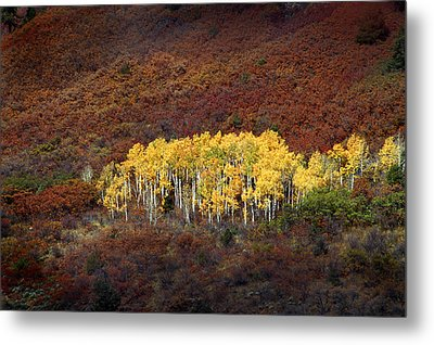 Aspen Grove Metal Print by Rich Franco
