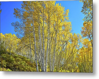 Metal Print featuring the photograph Aspen Lane by Ray Mathis