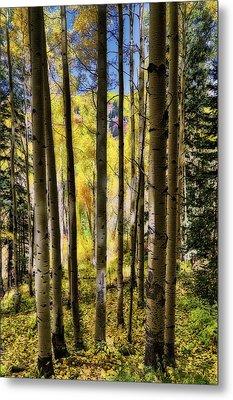 Metal Print featuring the photograph Aspen Mood - Autumn - Colorful Colorado by Jason Politte