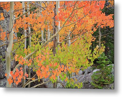 Aspen Stoplight Metal Print by David Chandler