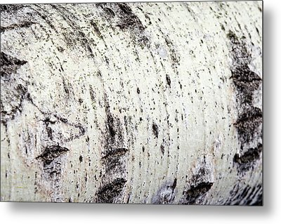 Metal Print featuring the photograph Aspen Tree Bark by Christina Rollo