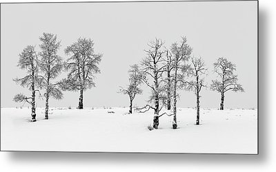 Aspen Tree Line-up Metal Print