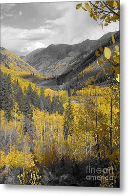 Aspen Valley In Fall Metal Print by Jeff White