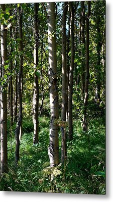 Metal Print featuring the photograph Aspens And Shadows by Marilynne Bull