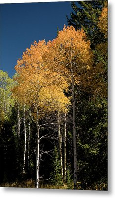 Metal Print featuring the photograph Aspens And Sky by Steve Stuller