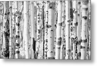 Metal Print featuring the photograph Aspens In Black And White  by Saija Lehtonen
