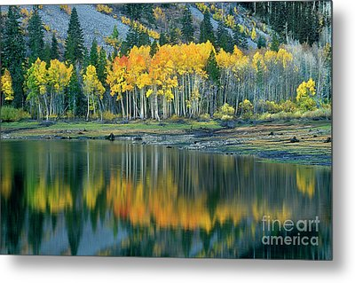 Aspens In Fall Color Along Lundy Lake Eastern Sierras California Metal Print