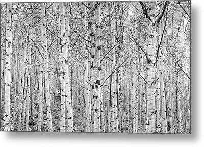 Aspens In High Key Metal Print