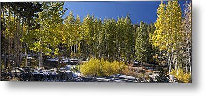 Metal Print featuring the painting Aspens by Larry Darnell