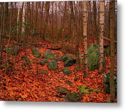 Aspens On The Appalachian Trail Metal Print by Raymond Salani III