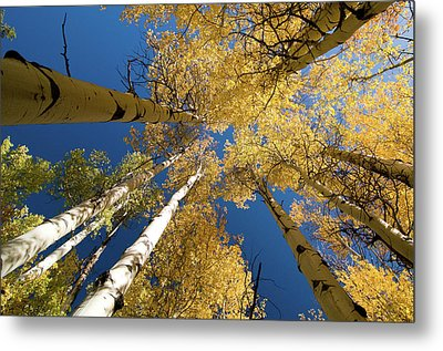Metal Print featuring the photograph Aspens Up by Steve Stuller