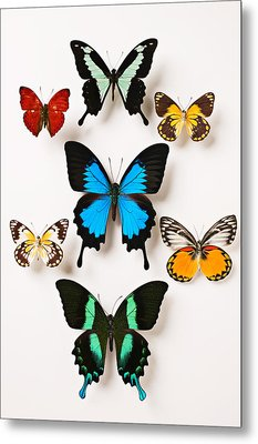Assorted Butterflies Metal Print