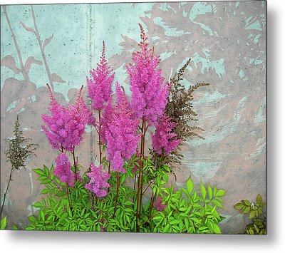 Astilbe And Shadows Metal Print by Randy Rosenberger