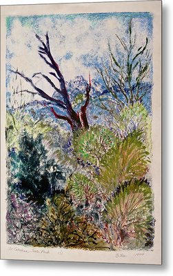 At Catalina State Park Metal Print by Bonnie See
