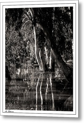 Metal Print featuring the photograph At The Swamp by Arik Baltinester