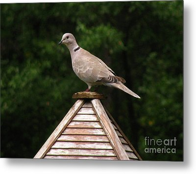 At The Top Of The Bird Feeder Metal Print