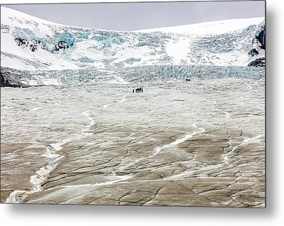 Metal Print featuring the photograph Athabasca Glacier With Guided Expedition by Pierre Leclerc Photography