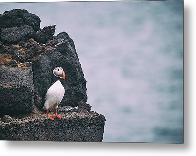 Atlantic Puffin Metal Print by Happy Home Artistry