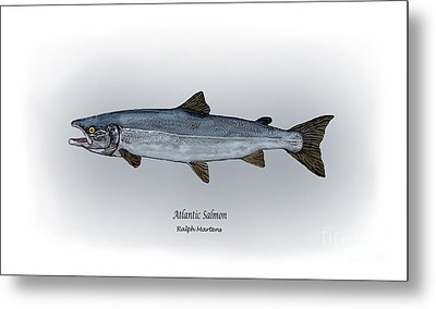 Atlantic Salmon Metal Print by Ralph Martens