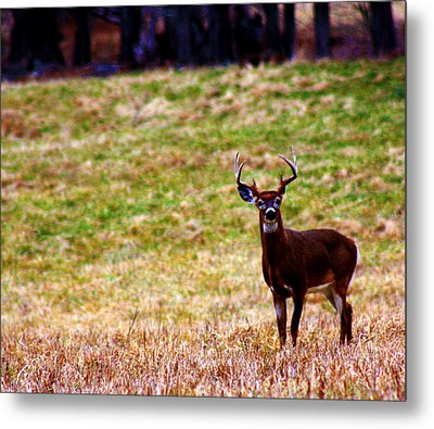 Attentive Buck Metal Print