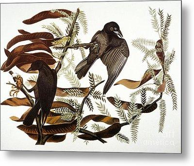 Audubon: Crow Metal Print by Granger