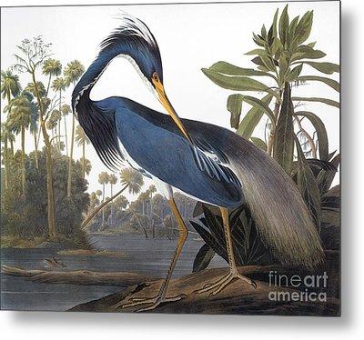 Audubon: Heron, 1827 Metal Print