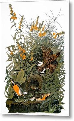 Audubon: Meadowlark Metal Print by Granger