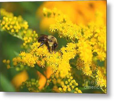 August Bee Metal Print by Susan  Dimitrakopoulos