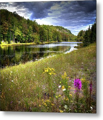Metal Print featuring the photograph August Flowers On The Pond by David Patterson