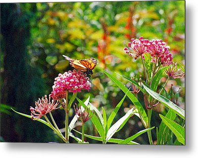August Monarch Metal Print