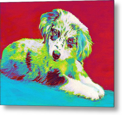 Aussie Puppy Metal Print by Jane Schnetlage