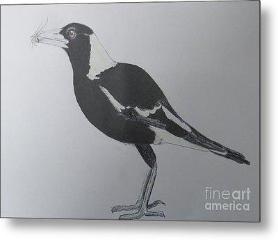 Australian Magpie In Pencil Metal Print