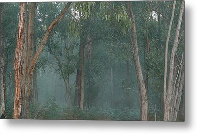 Australian Morning Metal Print