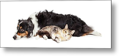 Australian Shepherd Dog And Cat Laying Together Metal Print