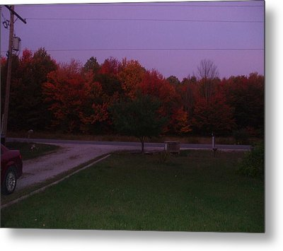 Autum Glow Metal Print by Rebecca  Fitchett