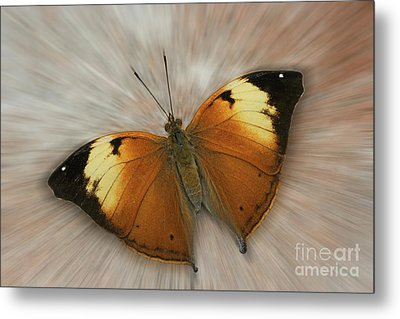Autumn Leaf Butterfly Zoom Metal Print