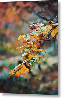 Metal Print featuring the photograph Autumn Aesthetics by Parker Cunningham