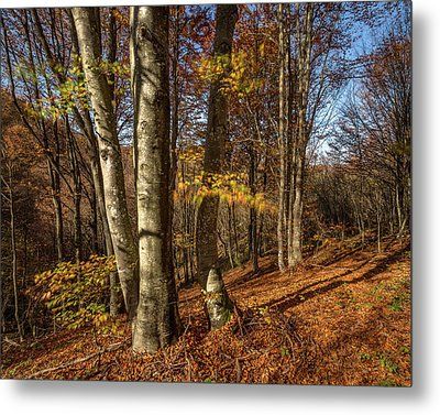 Metal Print featuring the photograph Autumn Afternoon In Forest by Davorin Mance