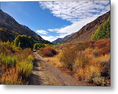 Metal Print featuring the photograph Autumn Arrives In Bishop by Dung Ma