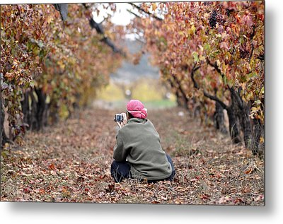 Metal Print featuring the photograph Autumn At Lachish Vineyards 1 by Dubi Roman