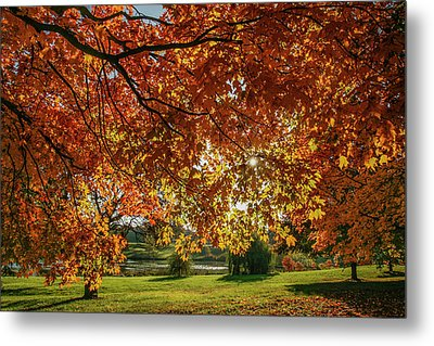 Autumn At The In Forest Park St Louis Missouri Metal Print by Garry McMichael