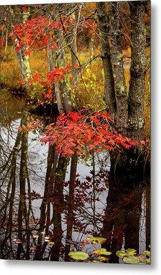 Autumn At The Pond Metal Print by Karol Livote