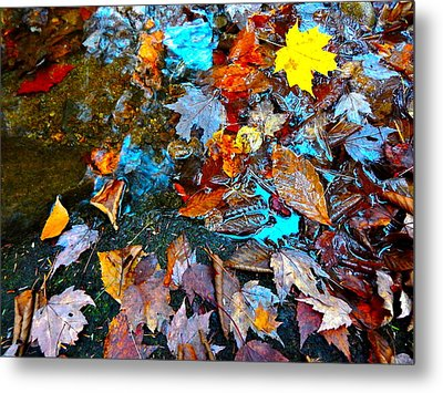 Autumn B 2015 124 Metal Print