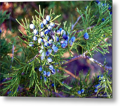 Metal Print featuring the photograph Autumn Berries by Betty Northcutt