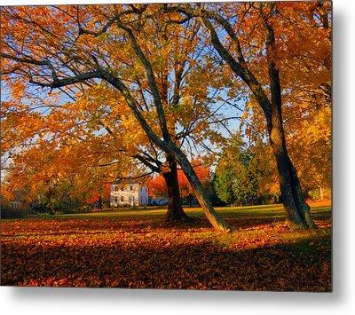 Autumn Blaze Metal Print by Dianne Cowen