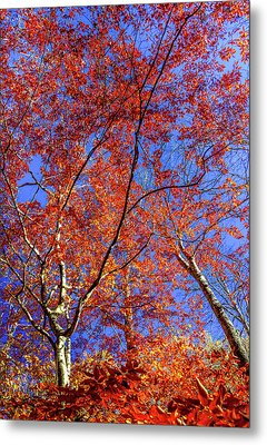 Autumn Blaze Metal Print by Karen Wiles