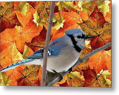 Autumn Blue Jay Metal Print